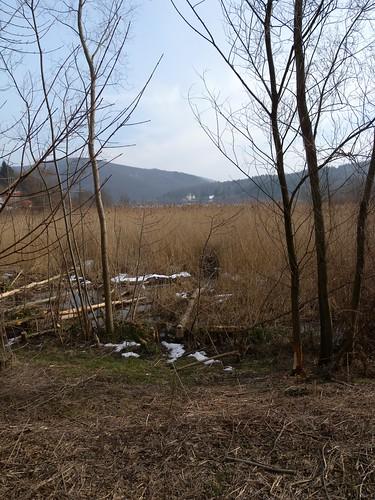 20150219_103_Wienerwaldsee (Large)