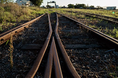 Train Yard (darkday.) Tags: wood old pink shadow urban woman hot sexy abandoned love broken beautiful grass car danger naughty photography graffiti foxy photo rust breasts pretty risk legs bokeh decay steel butt extreme descent tracks tshirt rail australia trains brisbane bum dirty chick grease adventure explore dirt mum mature urbanexploration infiltration attractive qld queensland shorts split tight aussie dust exploration seeker milf qr fit thrill trainyard bogie ue coupler urbex queenslander milfs abando brisbaneurbex placehacking australianurbex queenslandurbex