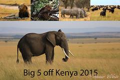 Big 5 (Steinar Eilerås) Tags: elephant kenya lion leopard samburu masaimara blackrhinoceros lakenakuru africanbuffalo