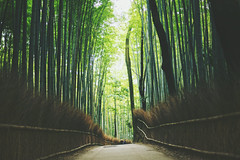 Arashiyama Bamboo Forest (Amanda Mabel) Tags: winter japan landscape kyoto surreal bamboo arashiyama osaka arashiyamabambooforest amandamabel