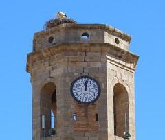 Cigonyes al campanar (bertanuri bcn) Tags: barcelona leica portrait bird tower clock cat lumix al torre bcn catalonia panasonic reloj catalunya horloge lanscape lleida campanar cigueas explores artesa catalogne rellotge ocell cigonyes oisseau bertanuri artesadelleida fz45 bertanuribcn
