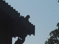 Monkey on Wat's Roof Phnom Penh