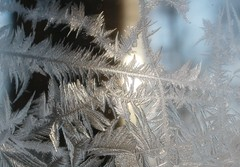 Frosty Morning Window (Memotions) Tags: winter ontario canada cold ice frozen frost wind guelph icy delicate patty windowpane ohearn kickham