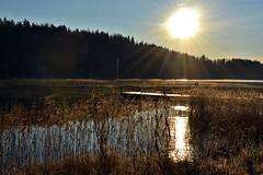 Lake near freezing (NE corner of Velskolan Pitkjrvi, Espoo, 20111120) (RainoL) Tags: november autumn lake espoo finland geotagged u fin nuuksio uusimaa nyland 2011 esbo velskola 201111 20111120 lakesofnuuksio velskolanpitkjrvi geo:lat=6030647800 geo:lon=2463768600