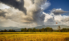 Vang Vieng Landscape (syukaery) Tags: trip travel vacation cloud holiday film tourism nature balloons landscape nikon scenery asia fuji farm velvia d750 laos ricefield tamron 1735mm vsco