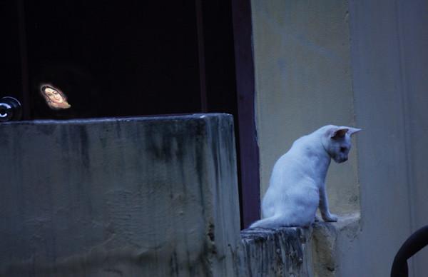 secret watcher