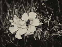 Puerto de la Cadena (Fran Ramos.) Tags: flores macro canon flora murcia cartagena invertido hongos setas