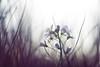Hidden Beauty (Elliot Tratt) Tags: lighting light summer plants plant macro nature closeup digital canon dark landscape eos close darkness natural hidden vignette vignetted natures 2016 400d