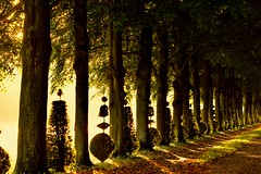 Good Morning my Friends! (Marie.L.Manzor) Tags: backlight sun sunrise forest morning path light silhouette nature landscape nikon nikon610 marielmanzor gettyimage morninglight woods tree trees green shadows