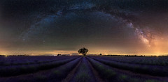 Stars And Stripes (Luca Libralato) Tags: provence provenza france lavender lavenderfields nightscape milkyway vialattea valensole pano panoramic libralato lucalibralato nikond750 nikon1424 tree solitarytree galaxy galassia galacticarch
