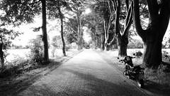 Allee der Buchen (north_brook) Tags: buche buchen bume niedersachsen naturdenkmal landschaftsdenkmal