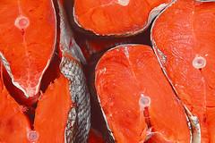Red fish (allejandrine) Tags: red fish food many stillife