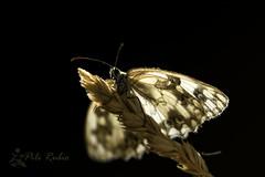 Abrió sus alas y me miró.. (PILIRUBIO) Tags: ltytr1
