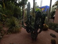 DSCN2625 (dbohaty) Tags: jardin majorelle morocco almaghrib