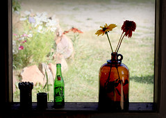 Let the Sun In (Cindy's Here) Tags: jug bottle 7up flowers window view billsoldamethystmine pearl ontario canada canon 107 116