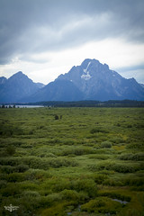 Moose Country (Marisa Sanders Photography) Tags: tetons grandtetons thegrandtetons nps np gtnp grandtetonnationalpark canon canon7d explore outdoors outside gtfoutside gtfoutdoors landscape photography