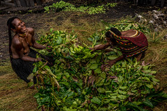 Happy Dani's Women Prepare for Cooking (tehhanlin) Tags: indonesia papua westpapua irianjaya wamena jayapura nusantara sony a7r2 a7rm2 humaninterest tribe thedanis sukudani portrait pigfeast earthoven ngc
