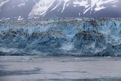 IMG_0511 (EliaZane) Tags: alaska glacier mendenhall sea ocean ice blue cruise