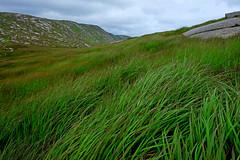 Green Connemara (iana) Tags: connemara green park torba erba grass
