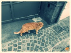 Orange Cat (triziofrancesco) Tags: animali animals gatti cats triziofrancesco street strada micio