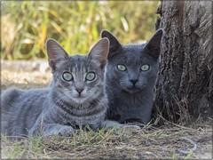 UNA DE GATOS 02 (BLAMANTI) Tags: gatos felinos mascotas