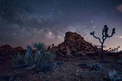 Joshua Tree (Stacy Brantley Photo) Tags: joshuatree cali california desert milkyway longexposure nightscape