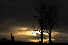 Winter, afternoon walk (Fiona * lunasdal) Tags: trees winter aberdeenshire