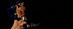 Retrato crioulo (Eduardo Amorim) Tags: brazil horses horse southamerica brasil caballo cheval caballos cavalos pelotas pferde cavalli cavallo cavalo gauchos pferd riograndedosul pampa hest hevonen campanha brsil chevaux gaucho  amricadosul hst gacho  amriquedusud  gachos  sudamrica suramrica amricadelsur  sdamerika jineteada   costadoce americadelsud gineteada  americameridionale eduardoamorim