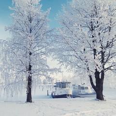 Kuopio | The Great Whiteness (Toni Kaarttinen) Tags: trees sky snow ice suomi finland square harbor frozen finnland ship harbour ships squareformat crema kuopio finlandia subzero フィンランド finlande finlândia savo finnország finlanda finlàndia финляндия finnlando iphoneography فنلندا instagramapp uploaded:by=instagram foursquare:venue=4c4583188c1f20a128d43d99