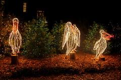 IMG_1571 (snoodz) Tags: christmas garden lights al pretty nightlights alabama christmaslights theodore 2014 bellingrathgardens