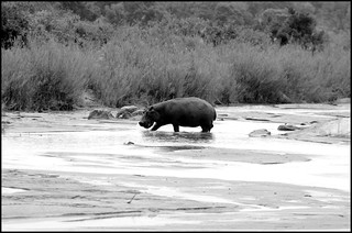 Südafrika 09-2014 (243)