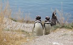 Puerto Madryn-34