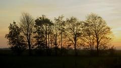 Abendhimmel in Fnfmhlen; Meggerdorf, Stapelholm (49) (Chironius) Tags: trees sunset tree germany atardecer deutschland evening abend zonsondergang rboles tramonto sonnenuntergang dusk boom arbres rbol alemania dmmerung crpuscule albero bume allemagne arbre rvore baum trd germania schleswigholstein gegenlicht schemering crepuscolo  ogie aa abends  pomie   niemcy   stapelholm meggerdorf pomienie szlezwigholsztyn