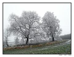 Ulmandi - - - 2014  Winter