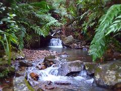 (D River) Tags: water rio forest river puerto agua focus rico bosque tones cascade cascada yunque enfoque tonalidades