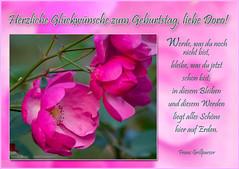 Herzliche Glckwnsche zum Geburtstag... (rafischatz... www.rafischatz-photography.de) Tags: rose garden pentax quote birthdaycard k3