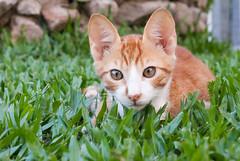SG105097 (Felipe Valduga) Tags: brazil cats cat kitten kitlens samsung laguna santacatarina samsunggx10 schineiderdxenon1855f3556