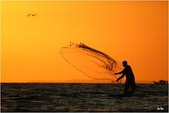 Pêcheur du soir (mars-chri) Tags: costarica pêcheur tarcoles côtepacifique fabuleuse