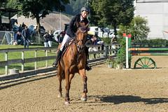 DSC08954_s (AndiP66) Tags: springen pferdesporttage dagmersellen luzern 2016 juli july 19juli2016 pferd horse schweiz switzerland kantonluzern cantonoflucerne concours wettbewerb horsejumping springreiten pferdespringen equestrian sports pferdesport sport martinameyer grueb wolhusen sony sonyalpha 77markii 77ii 77m2 a77ii alpha ilca77m2 slta77ii sony70400mm f456 sony70400mmf456gssmii sal70400g2 andreaspeters ch