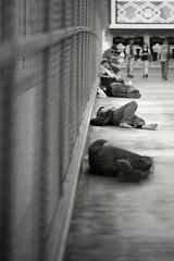 Dormitory Bridge  -  Las Vegas (fotographis) Tags: leica leicam leicam240 lasvegas homeless poor sleeping sidewalk blackandwhite blackwhite sigma sigmaart 50100mm