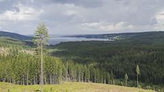 Irgendwo in Norwegen (snej1972) Tags: vacation holiday oslo norway norge urlaub norwegen skien vaterundsohn