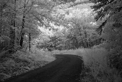 DSC_0169 (snolic...linda) Tags: arkansas infrared infraredblackandwhite petitjeanmountain petitjeanstatepark 501 woods countryroad