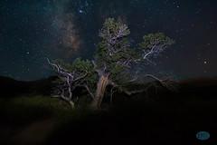0711 IMG_3615 (JRmanNn) Tags: tree stars astrophotography milkyway springmountain