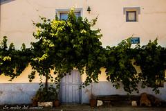 Al fresco / Getting some air (En medio del camino) Tags: europa europe espaa spain castillalamancha guadalajara utande casa house blanco white azul blue verde green parras vine puerta door
