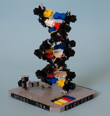 "DNA presentation plate (Deus ""Big D."" Otiosus) Tags: science lego moc dna model biology education visualization chemistry biochemistry genetics"
