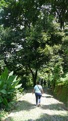 P1010983 (Mayan_princess) Tags: chiapas argovia finca resort caf coffee kaffee paraso paradise vegetacin vegetation verde green ro river spa relajacin relax forest selva orgnico autosostenible