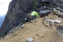 Pesky goat (hansbauck) Tags: climbing washington pass burgundy spire chianti