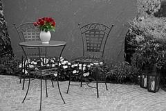 Roses (Niwi1) Tags: blossom flowers blten blumen hringen rosen outdoor nikon niwi1 rose sw sitzecke gemtlichstuhl tisch