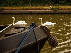 1295-18L (Lozarithm) Tags: aylesbury bucks canals guc pentaxzoom k1 28105 hdpdfa28105mmf3556eddcwr