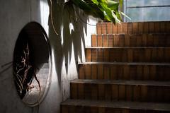 Shadow (Yuta Ohashi LTX) Tags: greenhouse    leaf leaves botanicalgarden      contrast plant nikon  d750 58mm f14 voigtlander nokton    focallens